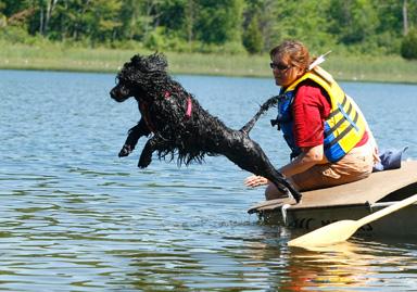Dog Agility Training Newmarket Ontario