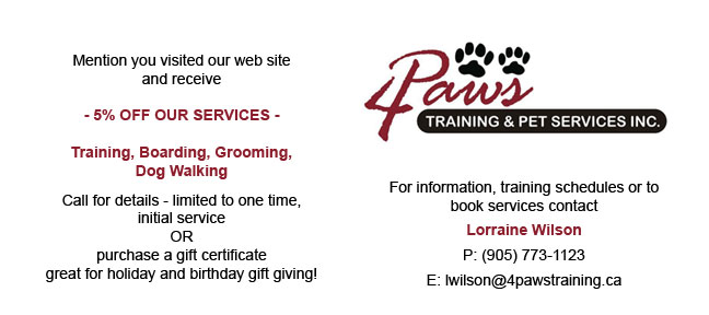 dog boarding and grooming 4 paws